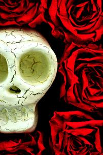 骸骨 薔薇の写真素材 [FYI00312197]