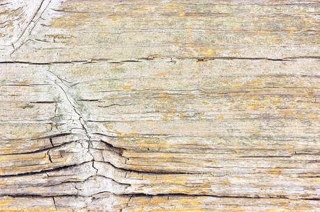 風化 木板 背景の写真素材 [FYI00312256]