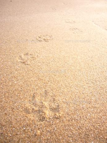 浜辺の足跡の写真素材 [FYI00312429]