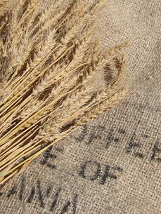小麦の穂と麻布の写真素材 [FYI00312545]