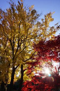 秋の日の写真素材 [FYI00312553]