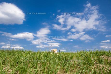 青空の下のトラの赤ちゃんの写真素材 [FYI00312555]