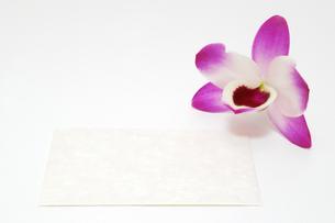 蘭とカードの写真素材 [FYI00312569]