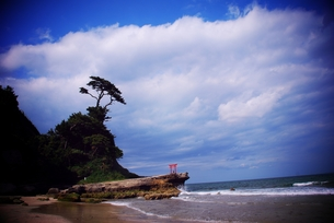 潮風と鳥居の写真素材 [FYI00312581]