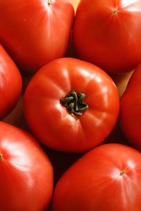 沢山のトマトの写真素材 [FYI00312584]