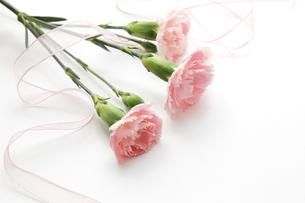 ピンクのカーネーションとリボンの写真素材 [FYI00312643]