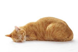 眠るネコの写真素材 [FYI00312785]