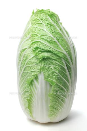 白菜の写真素材 [FYI00312924]