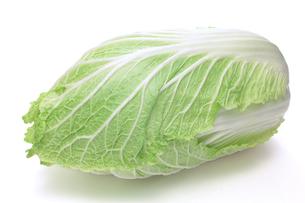 白菜の写真素材 [FYI00312928]