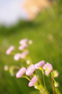 小さい花の素材 [FYI00312992]