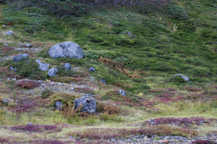 大雪山 旭岳の写真素材 [FYI00313018]