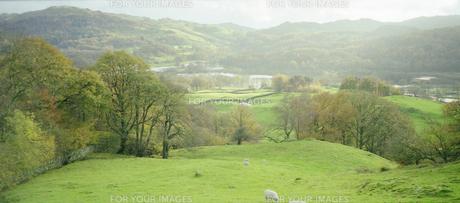 イギリス 湖水地方の羊がいる風景の写真素材 [FYI00313124]