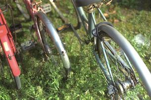 ぺんぺん草と自転車の素材 [FYI00313172]