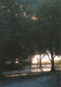 木洩れ日の路の写真素材 [FYI00313173]