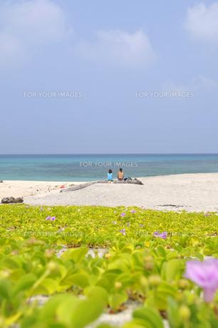 青い空と海、緑の植物白い砂浜に座るカップル の素材 [FYI00313184]