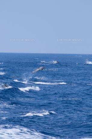 青い海を飛び跳ねるイルカの素材 [FYI00313193]