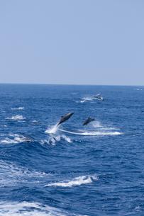 青い海を飛び跳ねるイルカの素材 [FYI00313197]