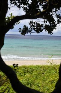 夏の青い海と樹の素材 [FYI00313199]