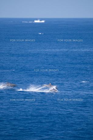 青い海を泳ぐイルカの群れと漁船の素材 [FYI00313207]