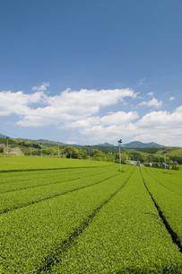 茶畑と青空の素材 [FYI00313216]