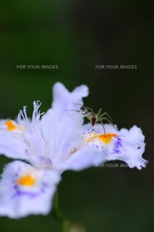 蜘蛛の庭の写真素材 [FYI00313251]
