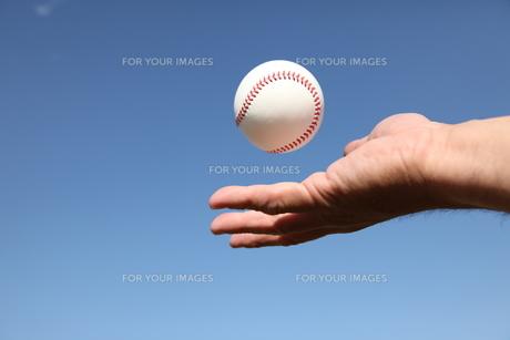 男性の手と硬球の写真素材 [FYI00313284]