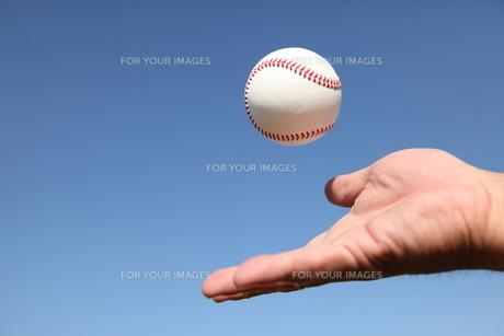 男性の手と硬球と青空の写真素材 [FYI00313297]