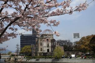 原爆ドームと桜の写真素材 [FYI00313301]