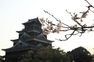 桜と広島城の写真素材 [FYI00313302]