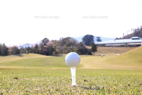 ティーアップされたゴルフボールの写真素材 [FYI00313307]