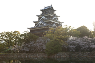 広島城と桜の写真素材 [FYI00313310]