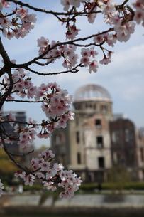 桜と原爆ドームの写真素材 [FYI00313315]