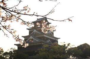 桜と広島城の写真素材 [FYI00313318]