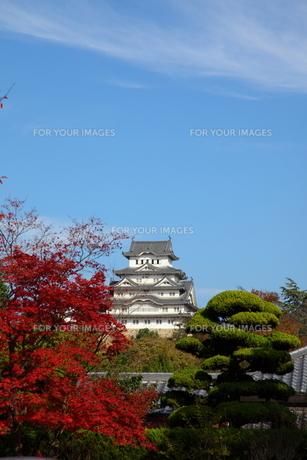 姫路城と紅葉の写真素材 [FYI00313344]