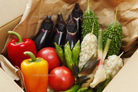 産直野菜の写真素材 [FYI00313551]