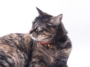 猫の写真素材 [FYI00313984]