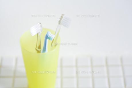 歯ブラシの写真素材 [FYI00314258]