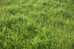 新緑の草原の素材 [FYI00314283]