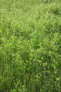 新緑の草原の素材 [FYI00314287]