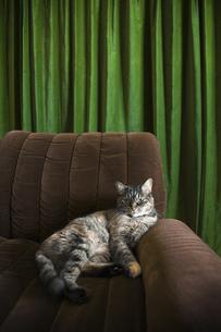 ソファーとネコの素材 [FYI00314315]