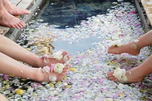花びらが入った足湯の写真素材 [FYI00314470]