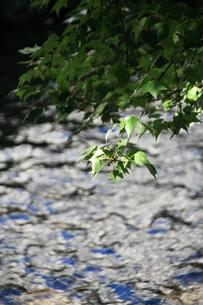 川の流れと緑の写真素材 [FYI00314543]