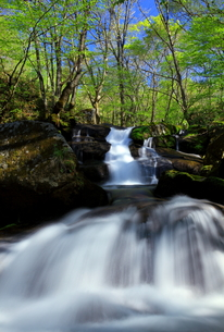一の滝の新緑の素材 [FYI00314622]