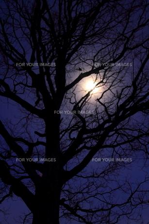 月光の素材 [FYI00314624]
