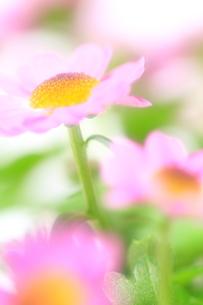 ほんのり春色の写真素材 [FYI00314629]