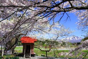 日本の春の写真素材 [FYI00314662]