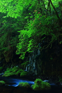 新緑の元滝 ツツジの写真素材 [FYI00314843]
