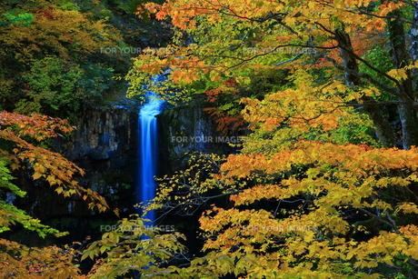 八幡平 曽利滝の紅葉の素材 [FYI00314875]
