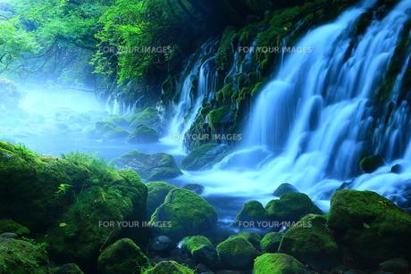 夏の元滝伏流水の素材 [FYI00314881]