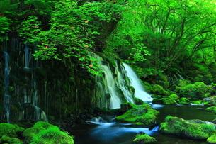 新緑の元滝伏流水の写真素材 [FYI00314929]